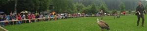 13-06-21 Poing-Geier